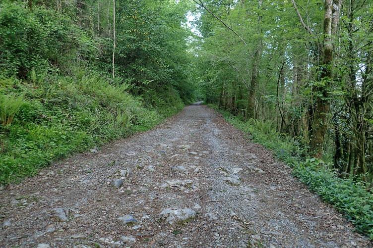 Début de la randonnée sur une large piste qui monte gentiment...