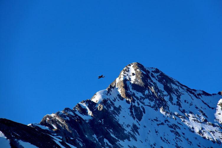 Un petit avion se promène à coté du Gabizos.
