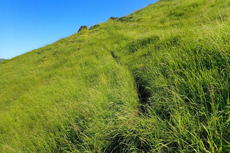 La randonnée est un peu sauvage. Les herbes sont hautes et dissimulent parfois le sentier.