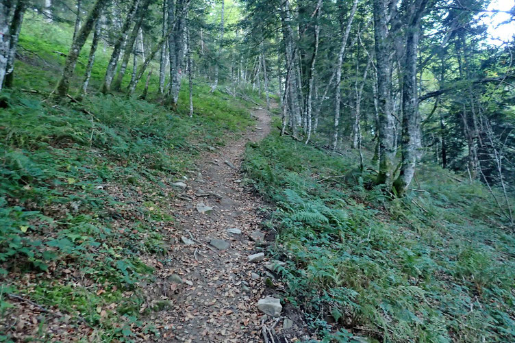 Le sentier dans la forêt.