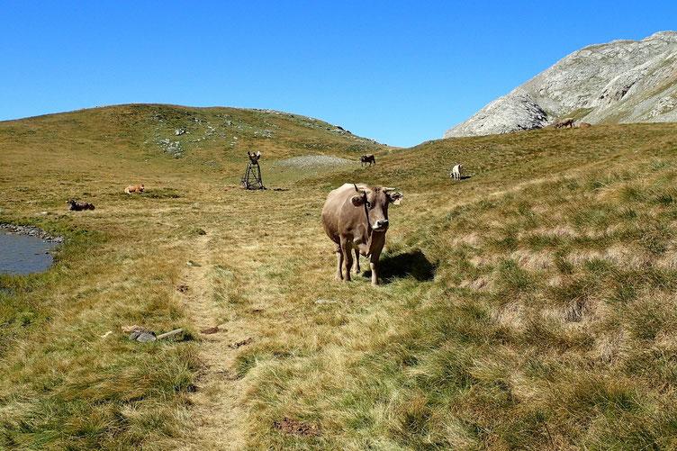 Un petit salut amical à la vache espagnole.