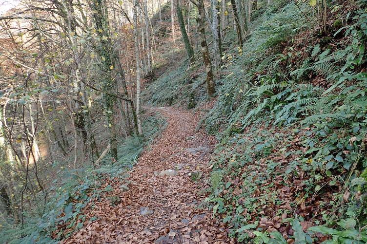 Nouveau passage dans les bois...