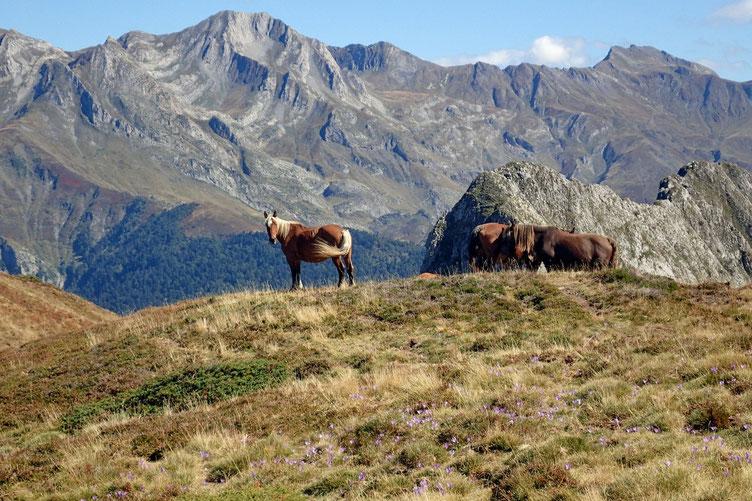 Les chevaux sont toujours là, exactement au même endroit que ce matin.