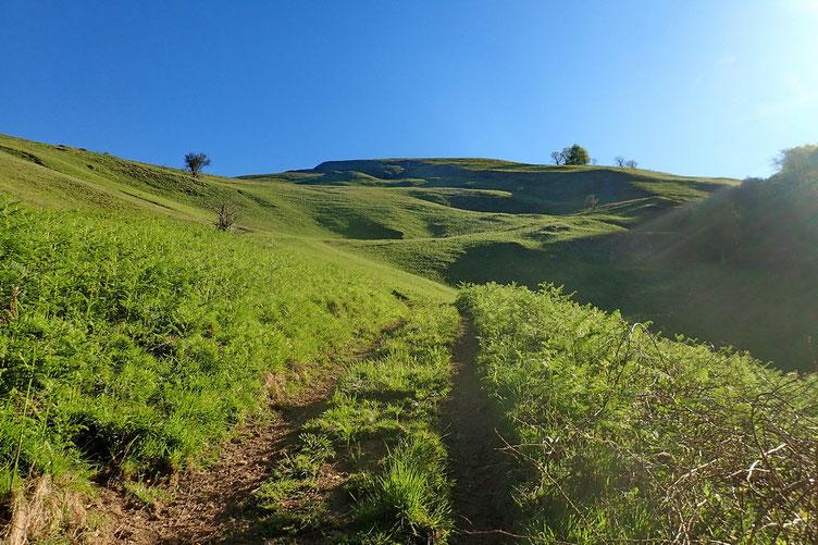 Le Salteburia est juste derrière ce petit mont.