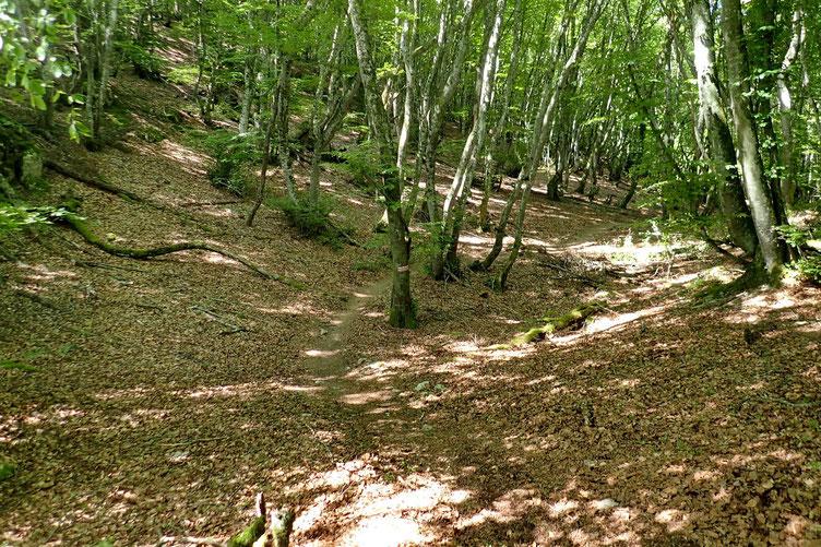 La suite de la descente se fait à travers le bois.