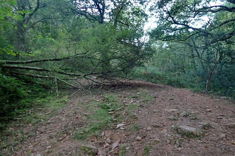 Quelques arbres entravent le chemin.