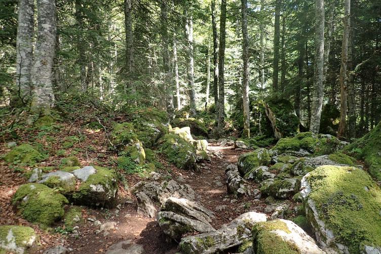 Près de 3 km dans la forêt... avec des montées et des descentes...