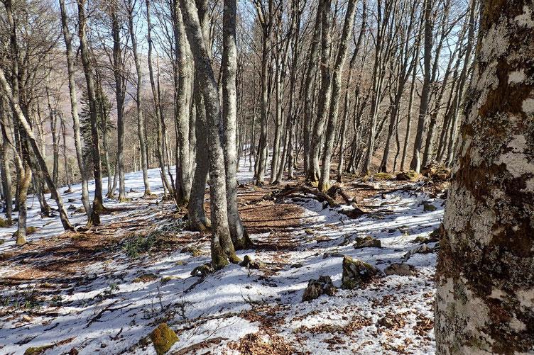 Petit passage dans le bois avec un peu de neige.