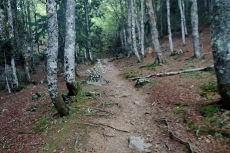 Passage dans le bois du Braca d'Azuns.