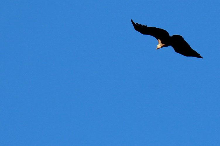 Quelques vautours sont venus nous dire bonjour... En fait, il y a encore du bétail dans les paturages, et ils attendent...