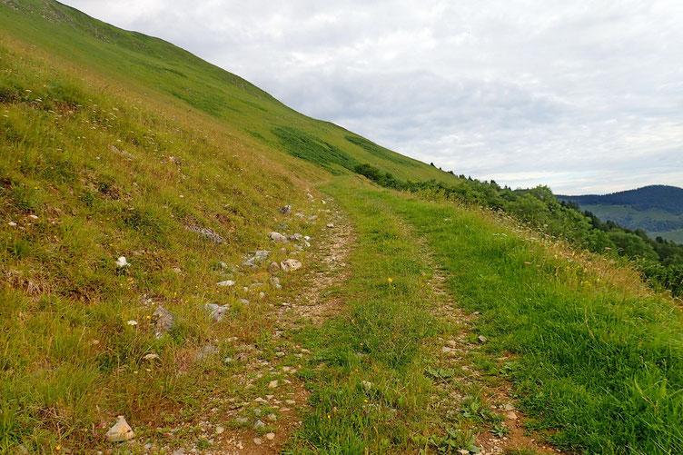 La montée se fait en suivant une piste assez large...