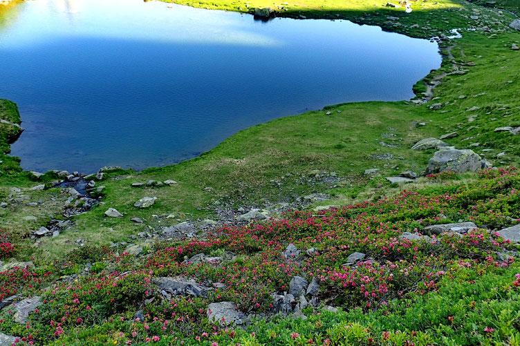 Ils tapissent tout le flanc Nord du lac.