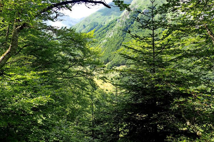 Une petite trouée dans la végétation pour voir le chemin qui monte aux cabanes d'Ansabère.