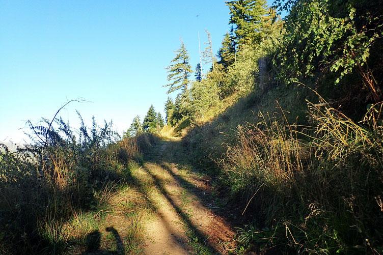 Montée tranquille en lacet dans la forêt domaniale.