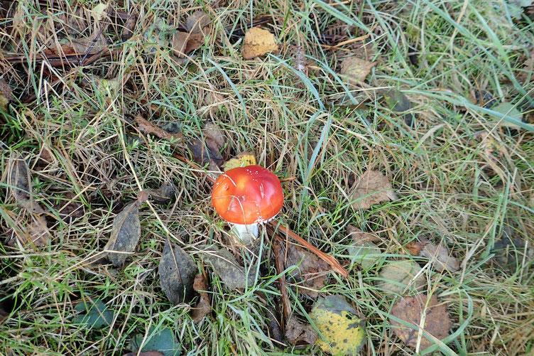 Oh les jolis champignons...