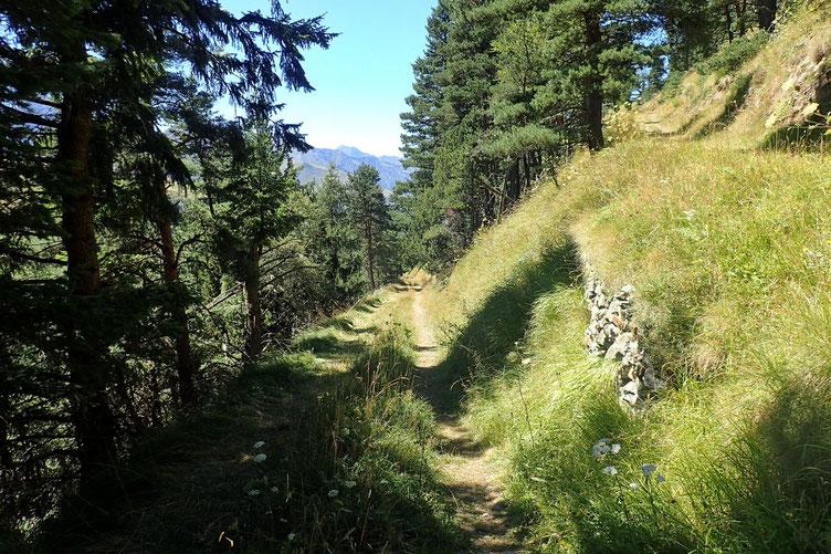 Et traversée de la forêt avec un peu d'ombre.