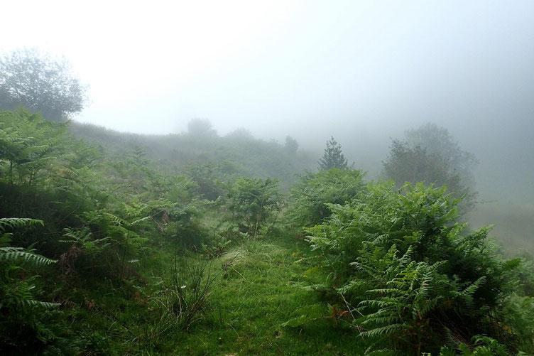 Le passage dans le bois a été très pénible. C'était la forêt vierge! Il semble que cela s'améliore un peu...