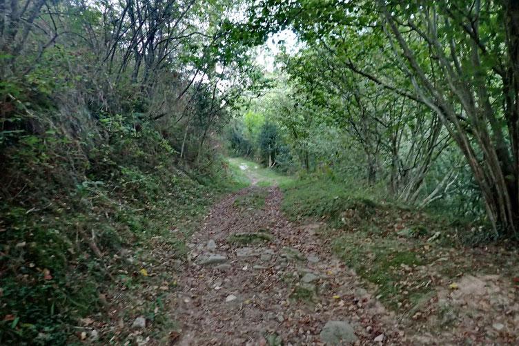 Montée à travers le bois de Mandobidea.