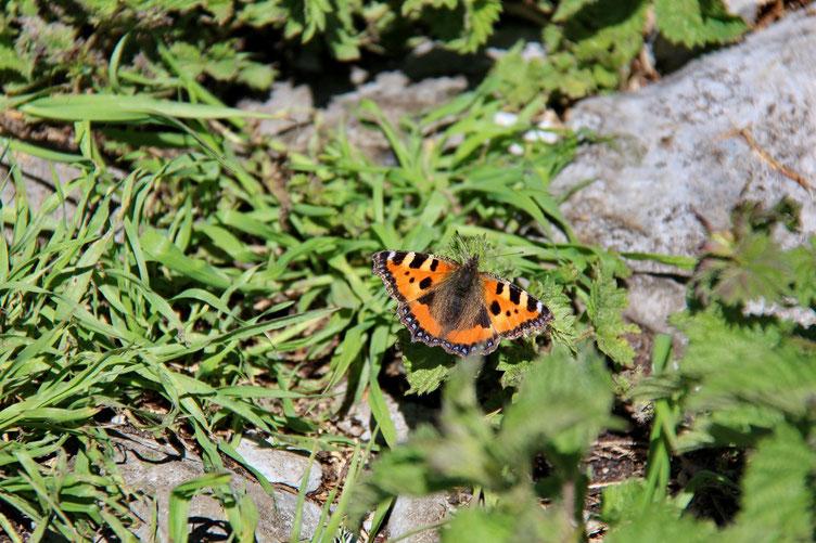 Et pause repas aux côtés d'un gentil papillon...