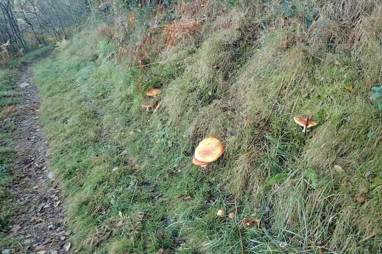 Avec plein de champignons...