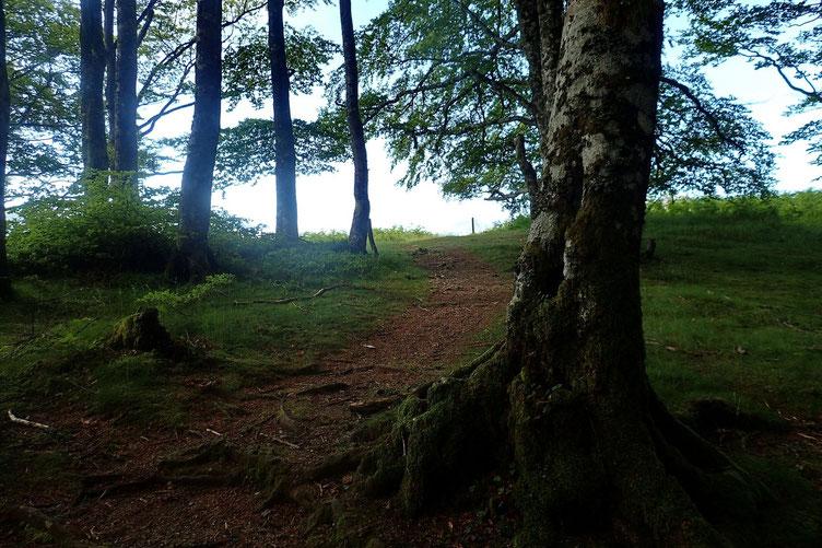 Après un passage dans les bois, le Belvédère est tout proche.