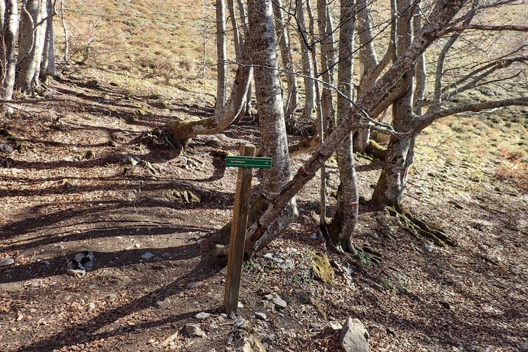 Je quitte la piste pour un sentier qui monte à flanc.