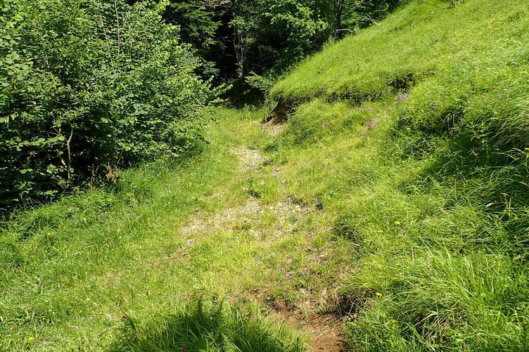 Après ce passage assez pénible dans les fougères, retour sur une petite piste.