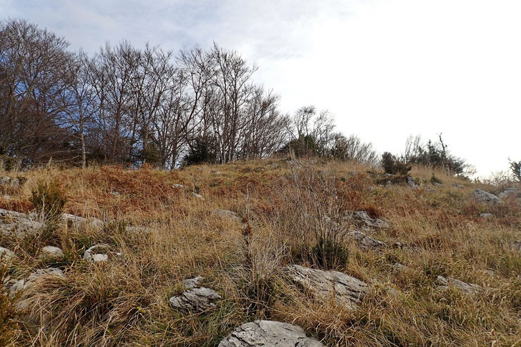 Le sommet est peu ou pas identifié. Localisé à l'intérieur du bois, il vaut mieux rester à l'orée pour admirer le paysage...