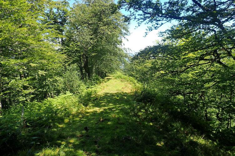 Passages en lisière ou dans les bois beaucoup moins pénibles que pour la montée. En plus il fait beau...