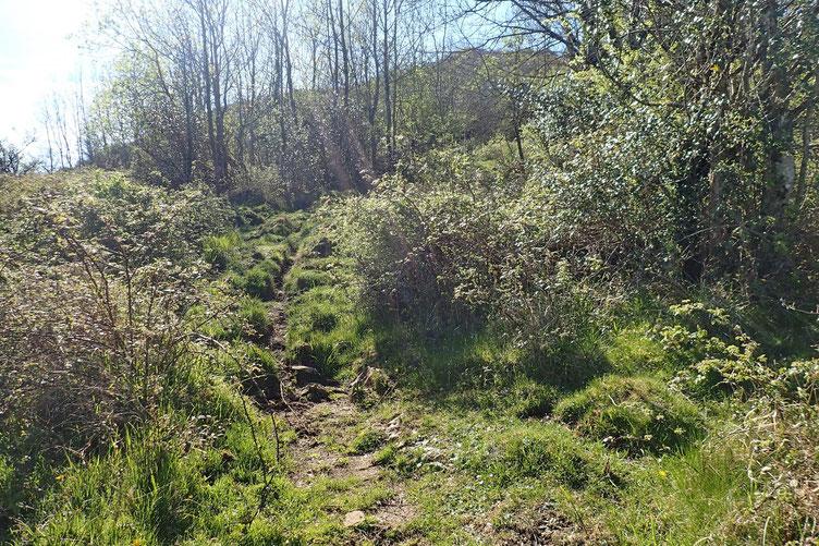 Le petit sentier qui serpentait bien à découvert a cédé la place à un autre sentier qui se faufile difficiliement entre broussailles, bois, rochers...