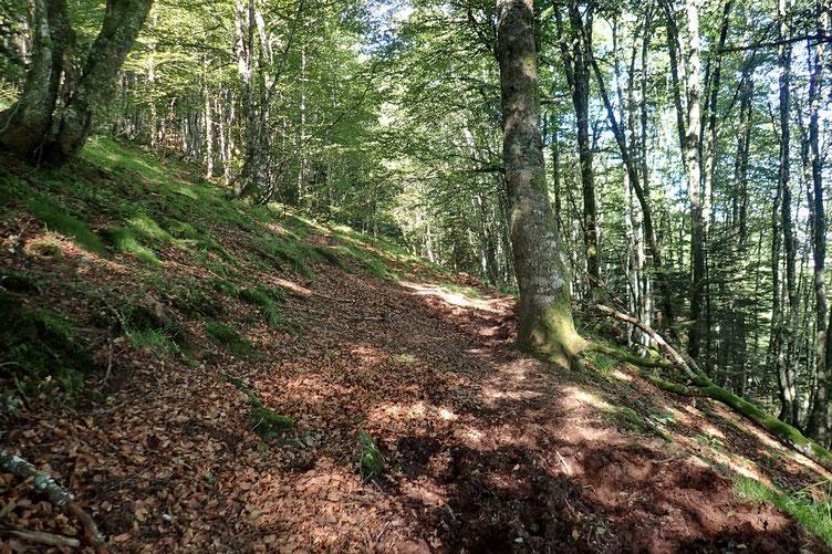 Nouveau passage dans un bois, beaucoup moins encombré de ronces que précédement.