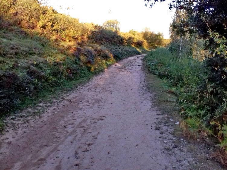 Le chemin est large, c'est un des nombreux itinéraires pour accéder à la Rhune.