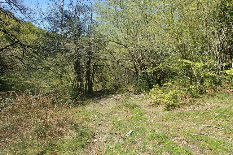 Entrée dans le bois où il y a un début de chemin... Chemin très peu marqué qui disparaitra quelques mètres plus loin.