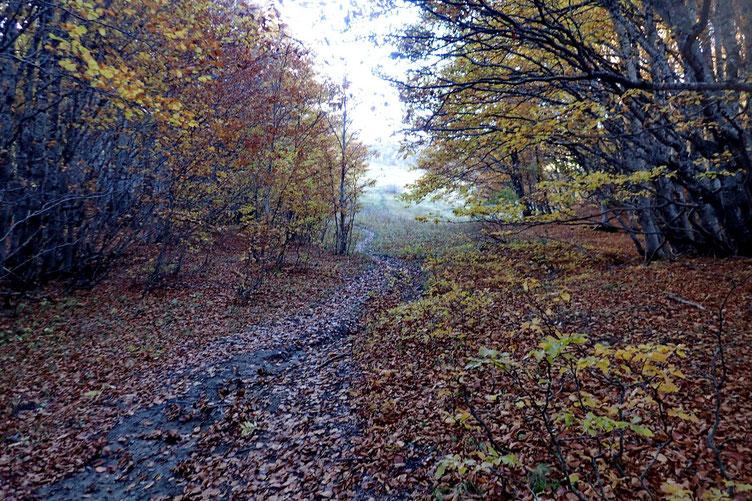 Au milieu du bois, la piste s'arrête et on monte un peu au jugé. Et à l'approche du col, la sortie du bois.