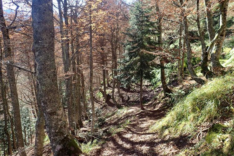Et puis entrée dans le bois.