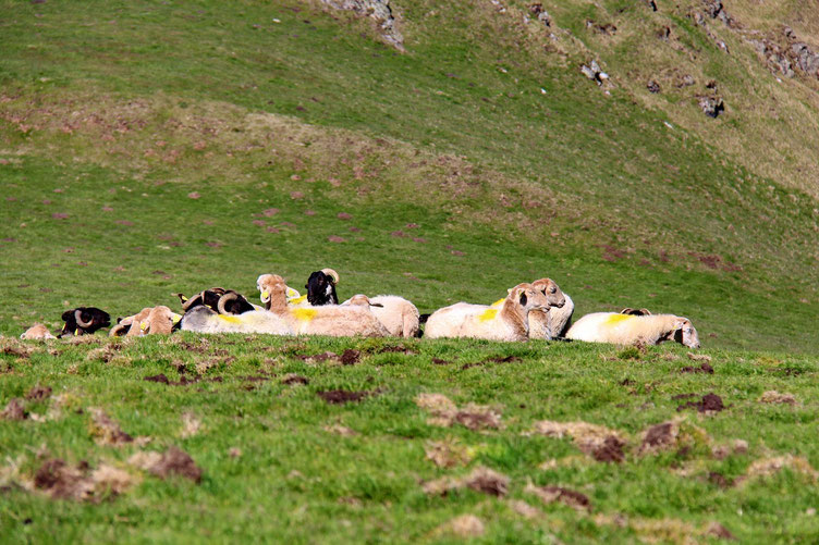 Avec un peu plus bas, quelques ovins.
