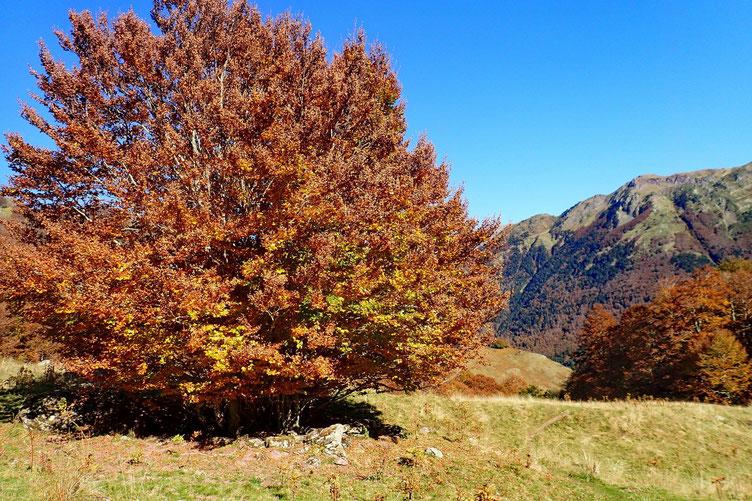 Bel arbre!!!