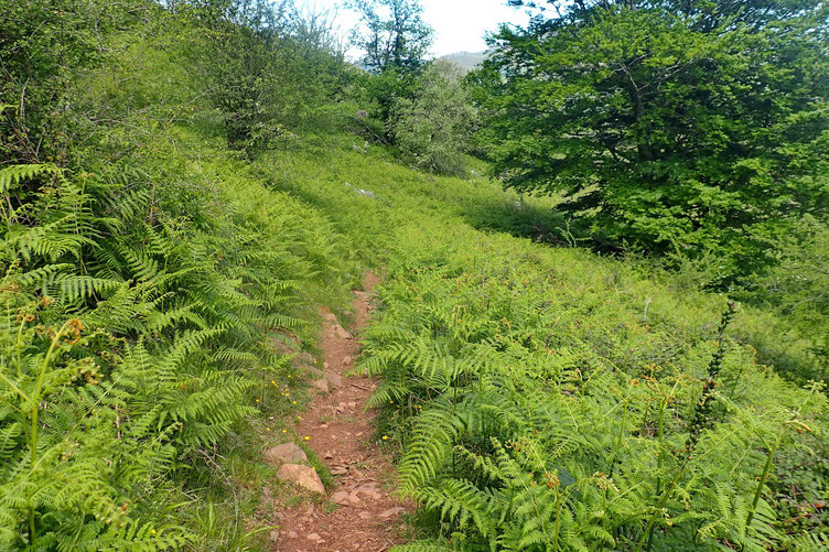 Le descente se fait via un petit sentier au milieu des fougères.