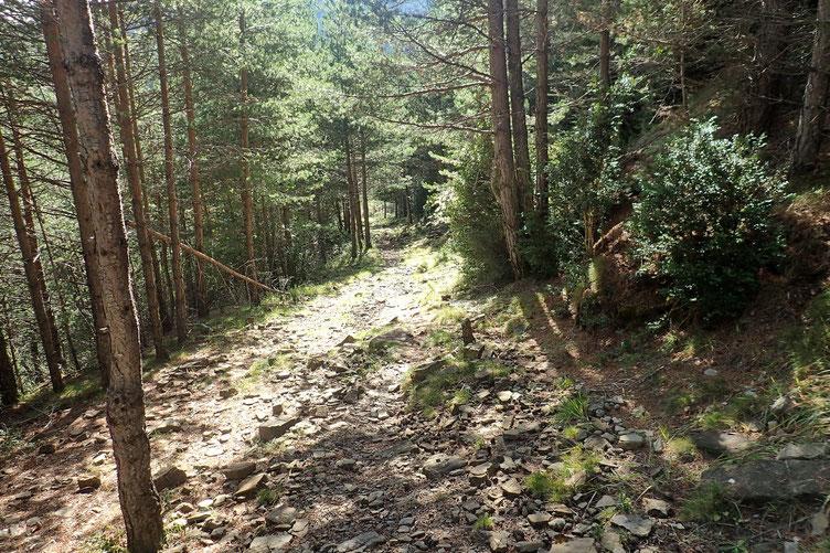 Le sentier à travers bois...