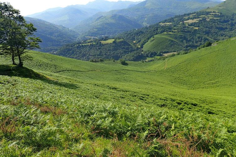 L'accès au Béout se fait aussi par ce sentier qui vient d'Ossen.