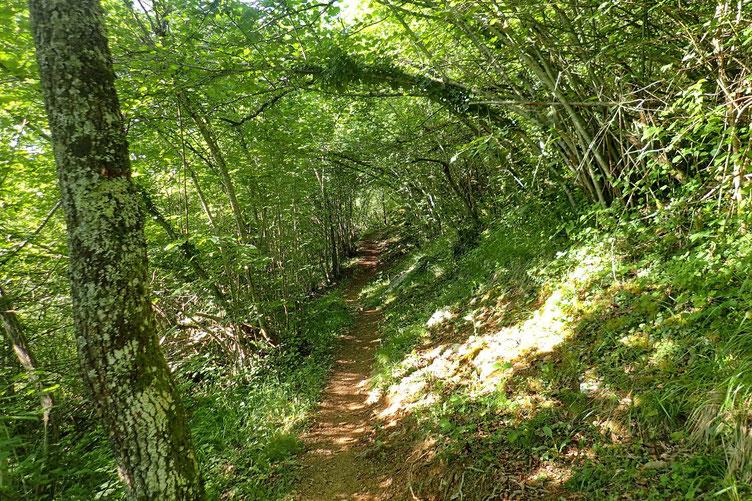 La journée va être chaude mais dans ce bois au petit matin il fait très bon.