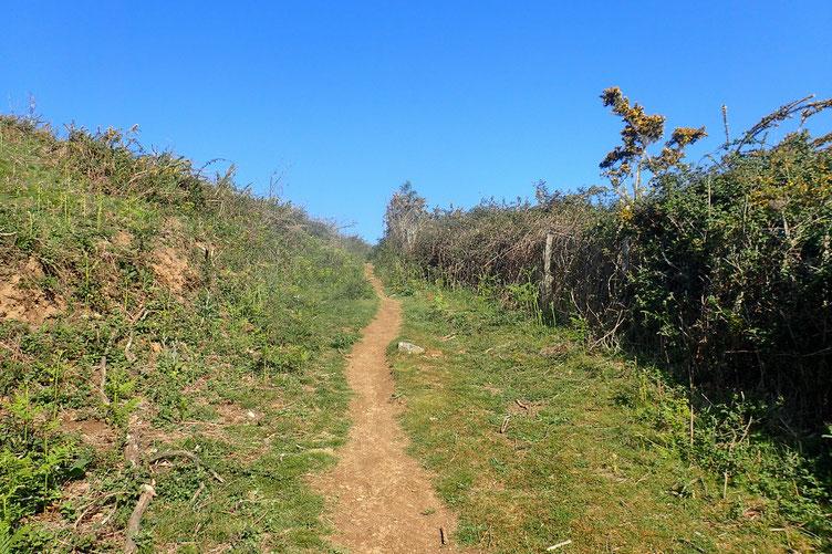 La piste a laissé place à un petit sentier.