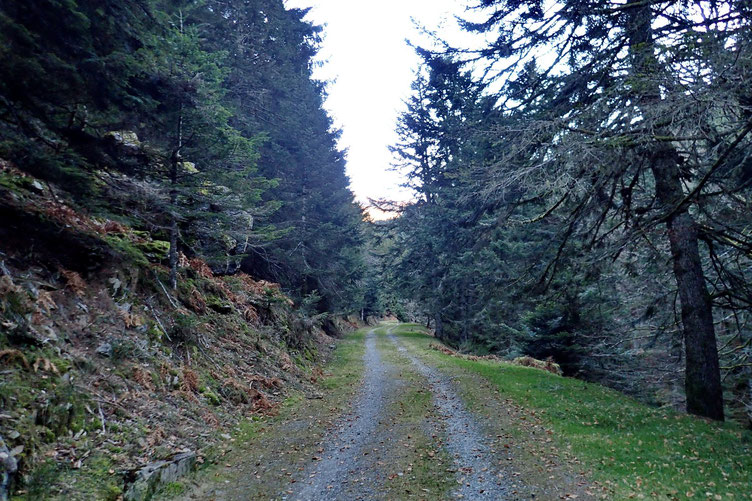 Je prends la piste qui monte au Col d'Aspin.