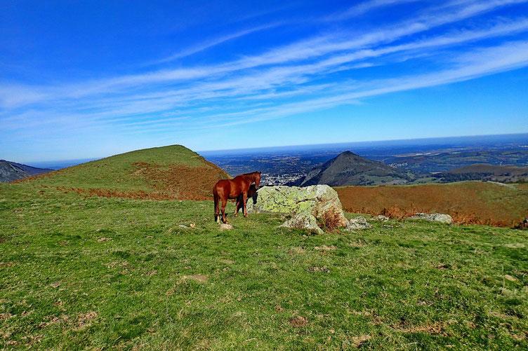 Un cheval pose devant le Tuquet de Lhési.