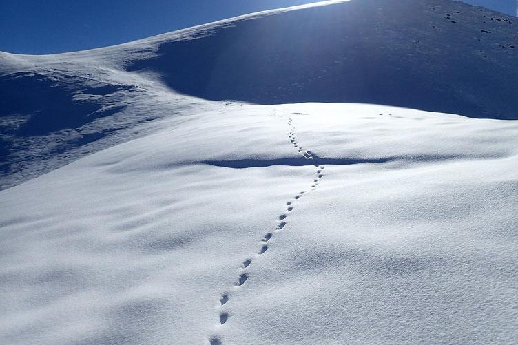 D'autres traces... probablement un renard.