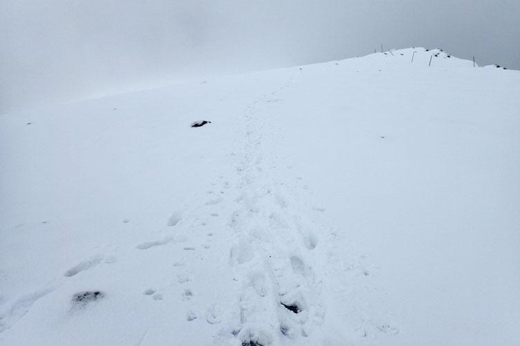 Mes traces plus celles de 4 randonneurs qui m'ont suivi me permettent une descente sans raquette.