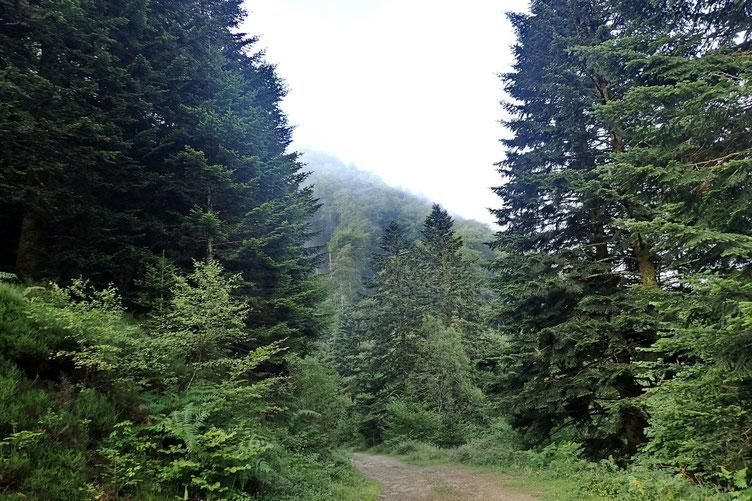 Le gros de la brume est au dessus de moi. Il n'y a plus qu'à espérer qu'en haut, je sois au dessus des nuages.