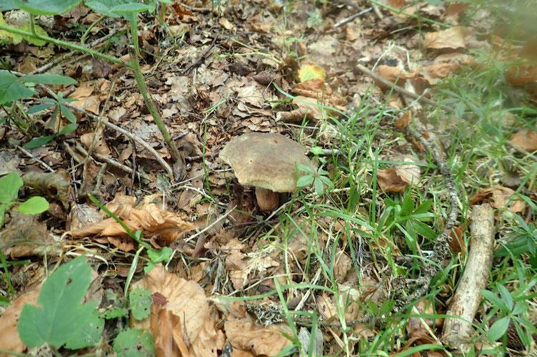 Reprise de la descente avec quelques champignons par-ci par-là.