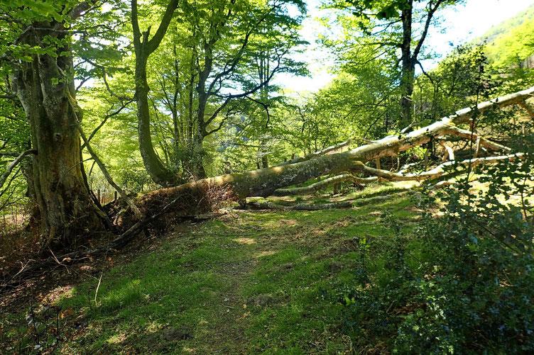 Reprise de la rando avec comme souvent des arbres en travers du chemin.