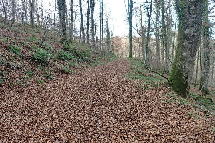Le chemin est ici tapissé de feuilles. C'est la fin de l'automne.